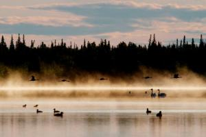 Early morning on the Yukon Flats National Wildlife Refuge, Alaska (Image: May-Le Ng)