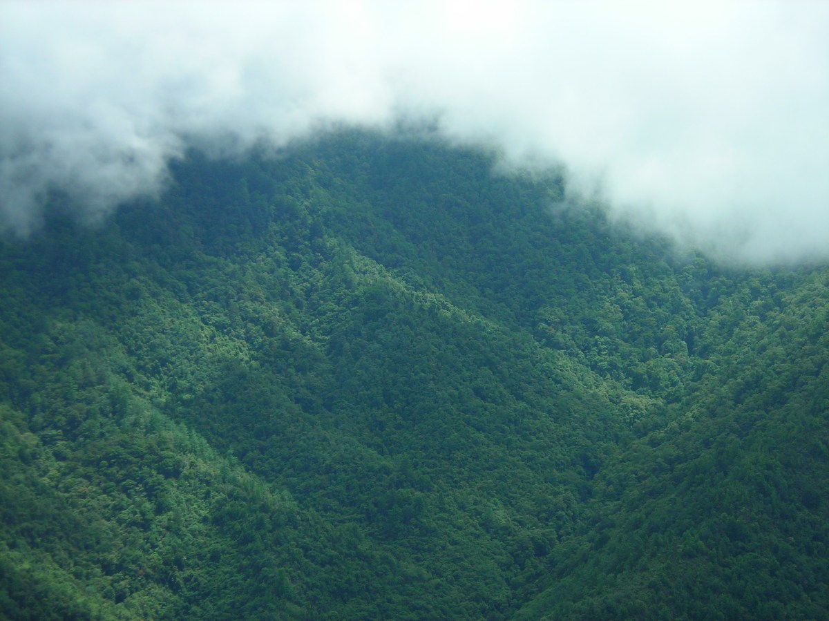 Extinction risk in cloud forest fragments under climate change and habitat loss